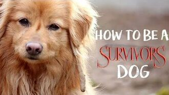 How to Be a Survivors Dog