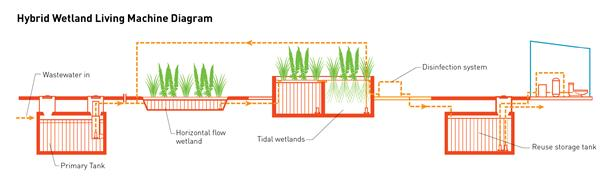 constructed wetland wastewater treatment systems sustainable water rh sustwatermgmt wikia com Swamp Soil Layers Diagram Constructed Wetland Diagram