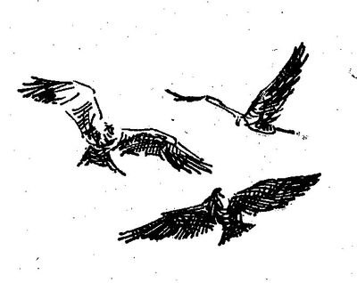 Raven 4