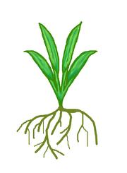 Stretchgrass