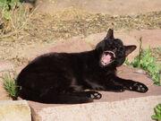 Towncat
