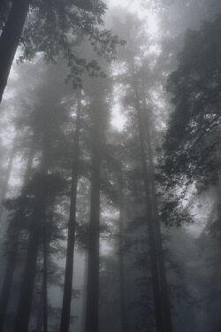 Wroshyr fog