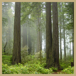 Redwoodnationalpark