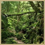 Puzzlewoodforest