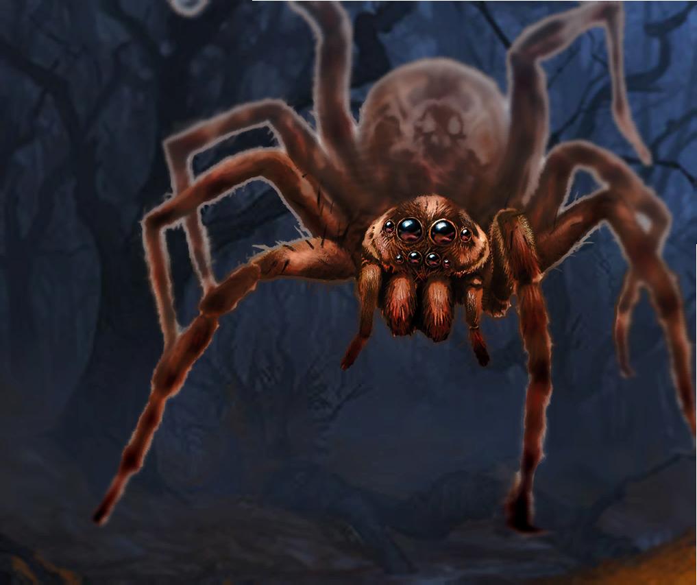 Giant Wolf Spider   Sword Coast Legends Wikia   FANDOM