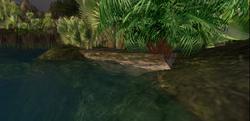 Zonama Sekot's swamp footbridge
