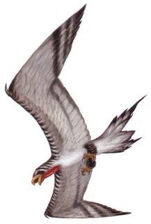 Corellian banshee bird