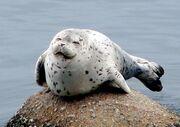 Happy-seal