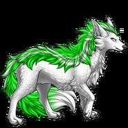 Image builder pet (6)