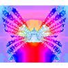 Wingsiris wings