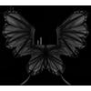 Wingssummer butterfly wings
