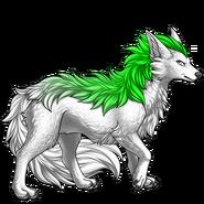Image builder pet (8)