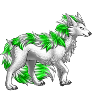 Image builder pet (7)