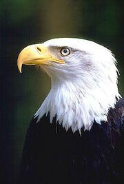 Eagles-face 894