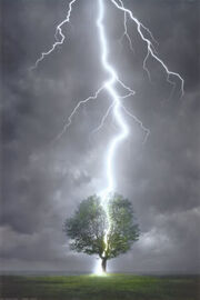 2400-4570Lightning-Striking-Tree-Po