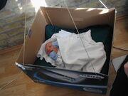 Vortex in box