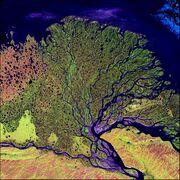 A river delta (Lena river)