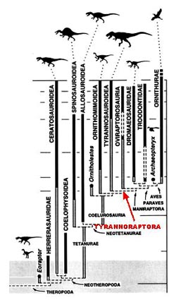 File:Theropoda.jpg