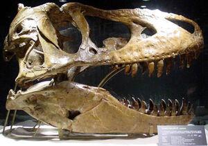 Tyrannosaurus bataar 9