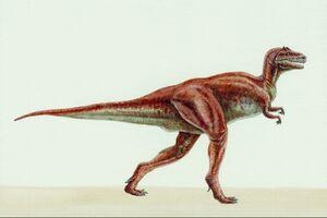 TYrannosaurus bataar 7