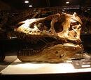 Comparisons: T. rex vs. T. bataar