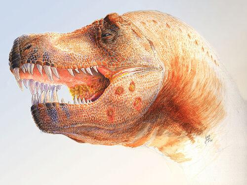 Tyrannosaurus infection