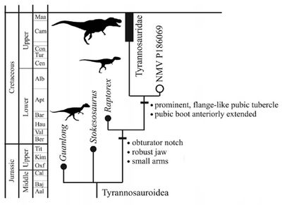 Tyrannosauridae cladogram