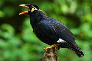 Tier vogel beo