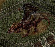 Dragon lh