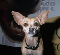 File:Taco Bell Dog.png