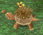 File:Mature Grass Tortoise.jpg