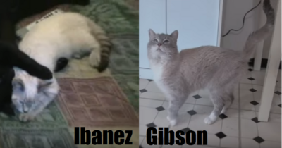 Comparison - Ibanez and Gibson 2