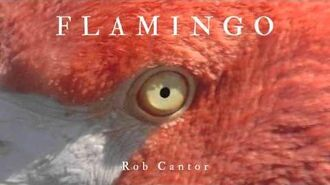 FLAMINGO - Rob Cantor (AUDIO ONLY)