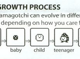 Tamagotchi Life Cycle
