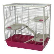 Rattenkooifrodo fuchsia