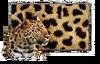 Jaguar Paint