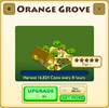 Orange Grove Tier 1