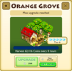 Orange Grove Tier 6