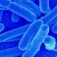 Craftitude ingredient bacteria