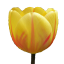 Craftitude ingredient tulip