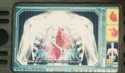 Binary vascular system