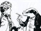 Badger (species)