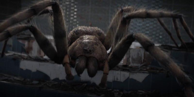 Image result for Arachnids in the uk