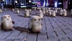 March of the Adipose