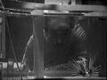 Zaroff fish UnderwaterMenace.jpg