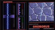 Oroborus2