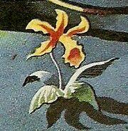 Flower on Skaro
