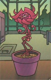 DWA CS 158 Pink Cichorium