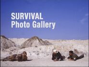 Survival Photo Gallery