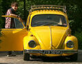Luke Beetle.jpg